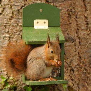 Eichhörnchen Futterhaus - Geschenk für Naturliebhaber