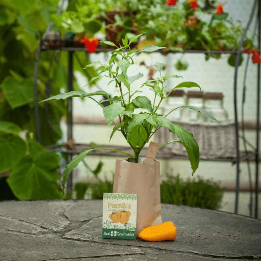 Gemüse selbst anbauen - Stadtgärtner Minigarten Paprika